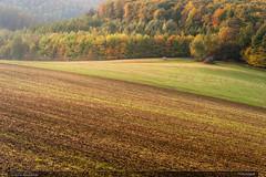 První houbař (jirka.zapalka) Tags: chriby landscape field trees forest czech rostin morning autumn