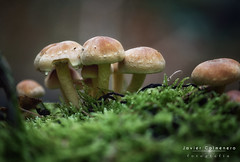 macro-11 (Javier Colmenero) Tags: bizkaia euskadi macrophotography nikon nikond7200 sigma sigma105mm urkiola vizcaya bokeh desenfoque macro macrofotografia mushrooms naturaleza nature setas abadiano paísvasco españa es
