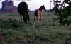 img005 (foundin_a_attic) Tags: horse 1970s hourse