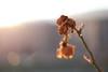 evanescence (wigerl - herwig ster) Tags: fujixt1 austria leaf 35mm kalt vorbei kärnten 2017 monochrome vergänglichkeit fuji fuji35mm14 fujilens österreich bokeh lieblich gardenpictures soft europa flower evanescence blume licht classicchrome light garden feldkirchen foto softbokeh tollestimmung fujicam ooc festbrennweite fujilove home cold lovemycam carinthia europe winter tiffen