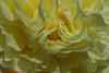ROSE-REAL JARDÍN BOTÁNICO DE MADRID-Madrid (FRANCISCO DE BORJA SÁNCHEZ OSSORIO) Tags: amor arrow love light luz life lovely flechazo focuspoint focus foco flower flor flores flowers funny foto photo pasión passion primavera spring summer shot verano stamens stamen madrid macroshot moment momento instant instante detalle detalles detail details desenfoque disparo delicado delicate divertido dof depthoffield exposure enfoque exposición timeexposure tiempodeexposición tripod temperaturadecolor trípode colour color composición composition colourtemperature framing realjardínbotánicodemadrid
