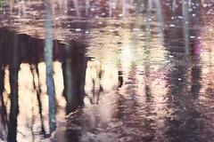 Icy Pond, Sunrise (DaveLawler) Tags: ice icy pond water lake surface sunrise morning worcester massachusetts trees reflection newengland frozen