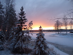 Look for the sun (jondewi52) Tags: branches colours colour clouds cloud cold dusk evening frozen forest ice jämtland landscape nature norrland nofilter outdoor outdoors river snow sky sunset trees tree winter woods no filter