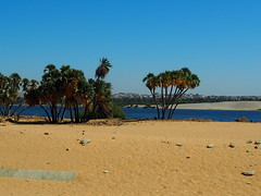 Nilufer vor der Aswan-Brücke (kleo2) Tags: ägypten egypt assuan stadt fluss oberägypten palmen sand ufer nil