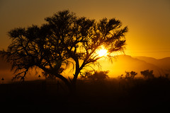 Sunrise in south west Africa (www.holgersbilderwelt.de) Tags: sesriem namib namibia sunrise nature beautiful light sky travel landscape street tree morning color mountain natural photographer outdoor africa shadow amazing weather silhouette tranquility rural countryside perspective safari attractive savanna national park valley aperture desert