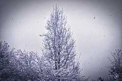 A Mild Snow Day (Jagger L) Tags: snow tree alabama