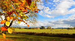 AUTUMN AT CROOME (chris .p) Tags: nikon d610 view colour croome worcestershire england autumn 2017 uk nt nationaltrust landscape croomecourt november tree leaf