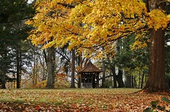 Gazebo among the fall leaves  (Explored-thank you) (outdoorpict (Traveling west for a while)) Tags: wood 1800s yellow red gold fallen trees conifer green outdoors fall lawn peaceful warm handmade branches leaves autumn