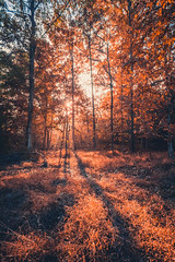 Hello Fall (ashercurri) Tags: youngsville nc north carolina woodland woods landscape trees sunrise sunset sony nex nex7 16mm wide angle forest edit