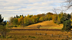 Manistee Country back country-late fall (bioprof52) Tags: wowiekazowie