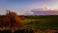 Hrasce, Postojna, Slovenia (DiSorDerINaMirrOR) Tags: slovenia sunset beautyofnature autumn autumnalcolours trees landscape nature naturephotography naturepics sony sonyalpha sonyalpha6000 sony6000 skyporn clouds postojna postumia hrašce postcard