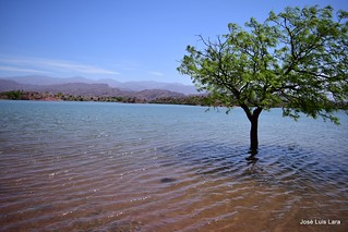 El árbol que ha quedado solo en el agua /  The tree that has been left alone in the water