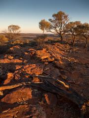 mutawintji - western ridge - 1162 (liam.jon_d) Tags: nsw australia australian billdoyle bynango bynangorange bynguano bynguanorange inland landscape mootwingee mootwingeenationalpark mutawintji mutawintjinationalpark nationalpark nationalparksandwildlife newsouthwales outback outbacknewsouthwales outbacknsw reserve west western westernnewsouthwales westernnsw