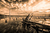 Post-Apocalyptic light (Gary Walters (offline for a bit)) Tags: hss sel1635z water postapocalyptic monochrome garywalters nature nj reflections newjersey sony sepia a7r manasquanreservoir dramatic