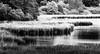 Reed winds up along the Shore (Beppe Rijs) Tags: deutschland germany schleswigholstein schlei wolken wolkendecke landschaft landscape natur nature horizont horizon clouds farbig colored line linie river fjord fluss ufer reet water wasser schilf black blackandwhite white grey schwarzweiss schwarz weis