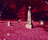 (Alex Bolen) Tags: aerochrome aero chrome infrared color medium format 120 orange filter 6x7 analog analogue michigan farm landscape pink red blue rb67 pro sd spy aerial sky grass field road graveyard