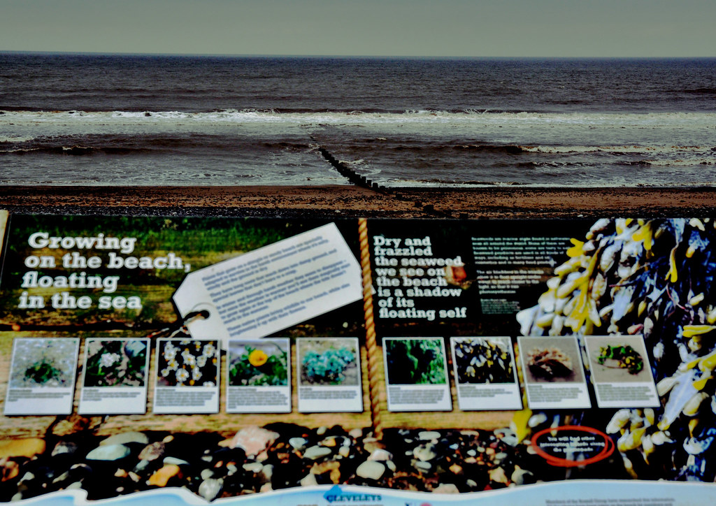 Beach Education Today