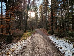 First Snow - Google Pixel 2 (Andreas Voegele) Tags: googlepixel2 pixel pixel2 snow forestlightsnow forestsnow landscape wald andreasvoegelephoto light search ooc
