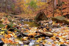 Upper King's Forest Park, Hamilton, Canada (leo_li's Photography) Tags: hamilton オンタリオ州 canada ontario fall autumn 加拿大 安大略省 hiking カナダ