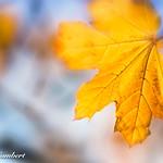 Autumn ..Indeed thumbnail