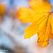 Autumn ..Indeed