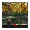 (giovdim) Tags: park tree yellow age sunlight giovis street greece people november