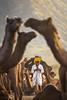 My Camel, my Shield (Sourabh Gandhi) Tags: camel fair pushkar mela shield portraiture portrait intriguing moment sabbyy sg sourabh gandhi images image photos photography photo environmental portraits traditing lake sunrise diaries sunset hues rajasthan jaisalmer mountains dunes sand faces indian sell getty stock istock gettyimages iamnikon depth field dof nikon nikond810 70200mm lens