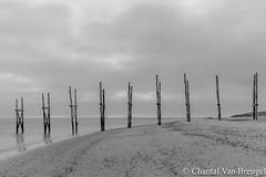 Texel oktober 2017 (Chantal van Breugel) Tags: texel zwartwit landschap zonsopkomst noordholland oktober 2017 canon5dmark111 canon1635