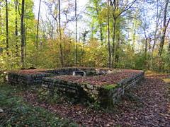 Muttenz Hard, 1.11.17 (ritsch48) Tags: muttenz hardwald wachturm römer römischewarte