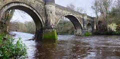 Dog Walking by the River Ayr (wheehamx) Tags: river ayr auchincruive oswald bridge