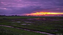 Purple sunrise (✦ Erdinc Ulas Photography ✦) Tags: sunrise purple netherlands nederland dutch green church kerk schellinkhout water windmill windmolen morning clouds wolken paars groen gras grass panasonic sundaylights