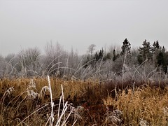 First Frost (rachael242) Tags: winter ice snow white nature frost freeze frozen trees forest wood landscape abstract sky brush grass field 7dwf