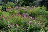 DSC_3245 (facebook.com/DorotaOstrowskaFoto) Tags: ogródbotaniczny kwiaty