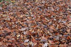 Wooooosh (daveandlyn1) Tags: leaves autumn woosh wythenshawe country park manchester uk iii f3556 efs1855mm 1200d eos canon