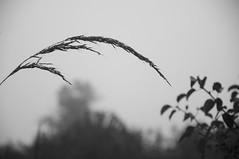 weed (avflinsch) Tags: ifttt 500px sun tree branch sunbeam boulevard bare birch treetop copse deciduous michelstadt