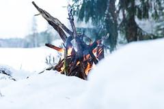 campfire burning in winter (VisitLakeland) Tags: finland fire palaa tuli campfire bonfire winter snow cold flame lake nature nuotio lumi talvi lakeland