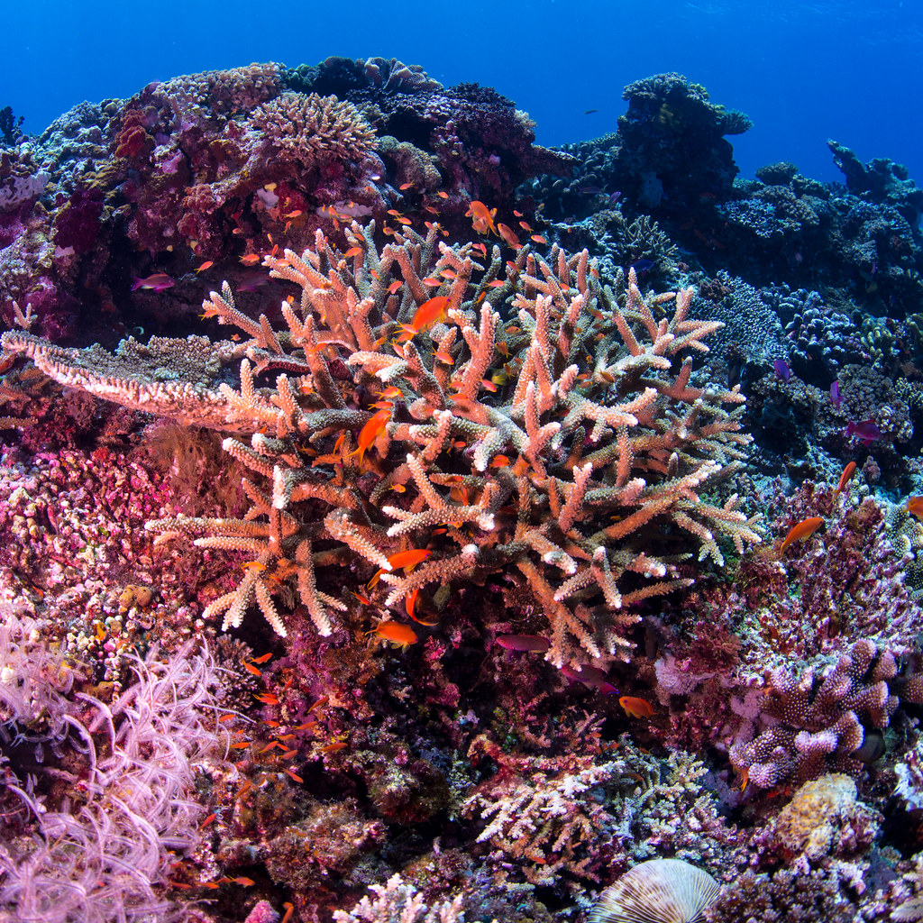 The World\'s Best Photos of coral and south - Flickr Hive Mind