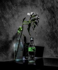 Coke Green (Steve Taylor (Photography)) Tags: coke milk bottle menu table art digital lowkey selectivecolour black grey green blue dark glass flower uk gb england greatbritain unitedkingdom london texture spring nationalportraitgallery bent glow stilllife