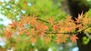 The Autunm leaves 2017 (Arlenk.) Tags: autunm autunmleaves red orange green bokeh arlenk japan canon7d ef70200mm 28lisiiusm
