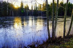 Ice covered pond. (janrs7) Tags: ice covered pond november winter norway cold sun trees trunks nature afsnikkor1855mmf3556