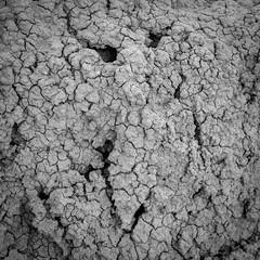 DSCF0729 (rjosef) Tags: borrego desert