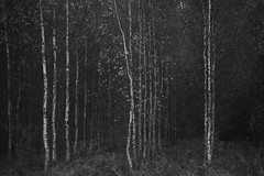 my monochrome autumn IX by Mindaugas Buivydas - Behance / Instagram