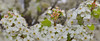 Spring-2017-Melbourne-Australia-DSC_6062 (fatima_suljagic) Tags: melbourne australianphotographers australia fineartprints fineartphotography canvasprints flowers flower collection nature naturephotographer nikond800 nfa
