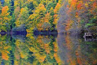 Yedigöllerde Sonbahar(Autumn in Seven Lakes)