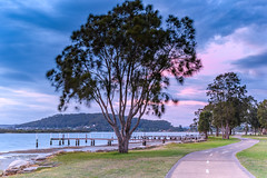 Early Morning by the Waterfront (Merrillie) Tags: daybreak path woywoy walkingtrack color trees overcasst cloudy water coast dawn beauty landscape weather newsouthwales clouds bay nsw brisbanewater light scenery beautiful scene nature scenic coastal sky waterscape view centralcoast sunrise australia