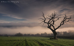 When The Sky Meets The Land (.Brian Kerr Photography.) Tags: cumbria edenvalley greatsalkeld mist mistymorning oldtree deadtree landscapephotography landscape photography photo a7rii availablelight sony formatthitech briankerrphotography briankerrphoto nature naturallandscape natural outdoor outdoorphotography opoty onlandscape tree clouds sky cloudinversion misty morningmist coldmorning weather beautifulmorning