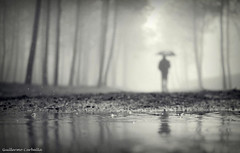 The passenger of the rain. (Guillermo Carballa) Tags: umbrella man alone people bw water puddles pines trees fog mist forest woods light carballa em5 olympus