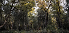 Sunlight penetrating a dark forest (Tom Birtchnell) Tags: woods landscape uk london england nature trees
