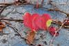 Doppelherz (Sockenhummel) Tags: bundesplatz efeu wein weinland wilderwein herbst blätter mauer laub leaves fall tunnel berlin fuji x30
