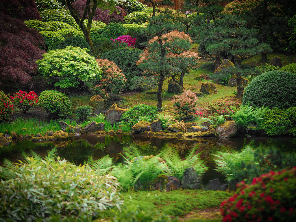 The world 39 s best photos of japanese and koi flickr hive mind for Portland japanese garden koi